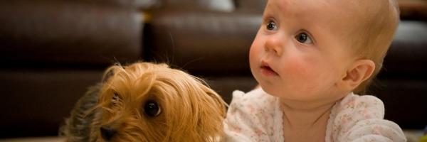 Yorkie & Morkie Small Toy Dog Breeder - New Windsor